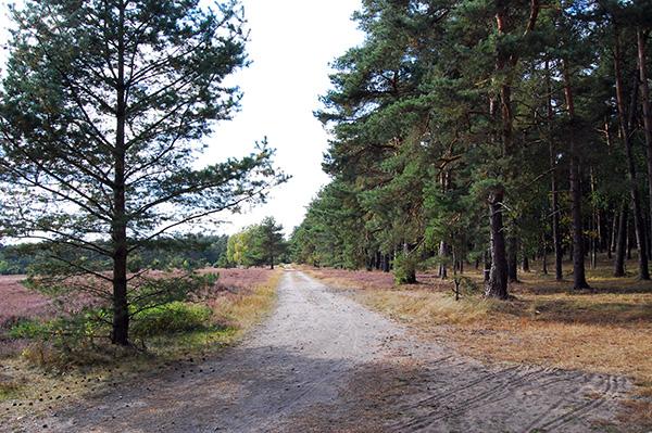 Krellinger Heide